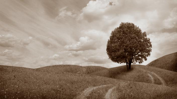 Découvrez le chemin vers le succès